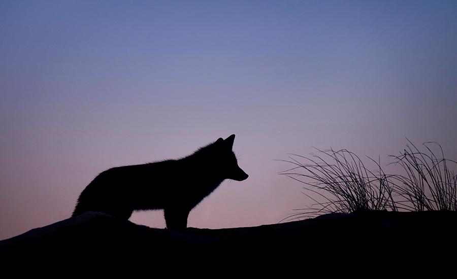 Full Moon Hike Wildlife